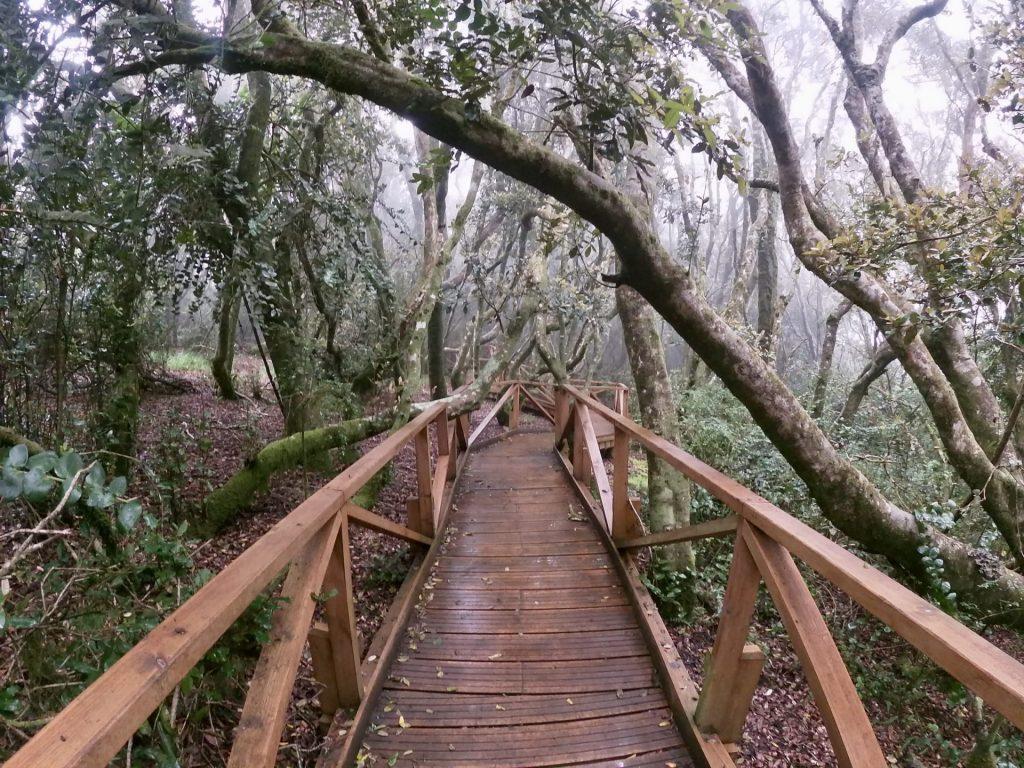 Bosque Valdiviano en la Región de Coquimbo.